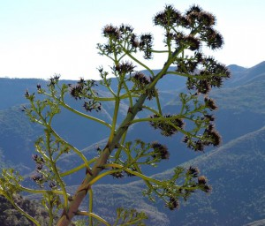 Naturaleza en la Sierra de las Nieves